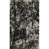 1920 Press Photo A young boy in a bunch of tree branches