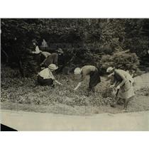 1922 Press Photo Group of Tourists picking flowers at the White House grounds
