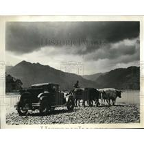 1936 Vintage Photo bullocks still use for transportation New Zealand