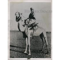 1937 Press Photo The duke of Aosta as he rides a camel