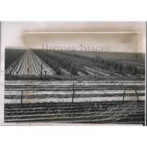 1937 Press Photo Shelter Belt in Oklahoma - nee04661