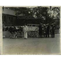 1926 Press Photo Oxen Pull Charles Pritchard Milk Wagon, Harvard University
