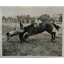 1936 Press Photo Findon Oaklands Hunt Club Rider falls - nee43150