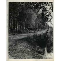 1945 Press Photo Moose Runs Across Road, Sweden - nee45285