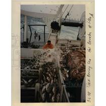 1998 Press Photo Tons of fishes got from Bering Sea - orb08120