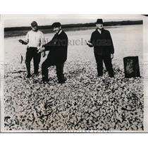 1938 Press Photo RM Norman, AM Flynt, AL Kirby & menhaden fish in NC - nes43537