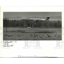 1992 Press Photo Canadian geese at the runways of Portland International Airport