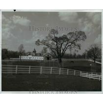 1971 Press Photo View of horses in pasture in Kentucky - cvb58545