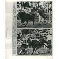 1974 Press Photo Rodeo Clowns Bull Thrown Riders Chase
