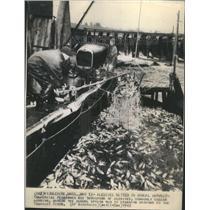 1943 Press Photo Herring Netting - RRR48573