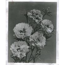1955 Press Photo Portugal Gardens