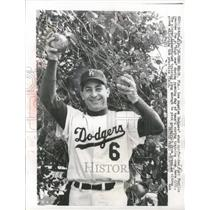 1958 Press Photo Los Angeles Dodger star outfielder Carl Purillo reaches high.