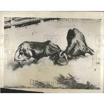 1929 Press Photo Group Process Metamorphosis Process