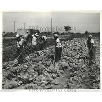1932 Press Photo Garden Space Man Material Michigan - RRR87335