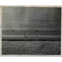 1951 Press Photo Charmaine Manor-shooting- Dorothea Linn - orb98415