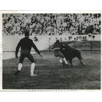 1968 Press Photo Portuguese Style Bullfighting