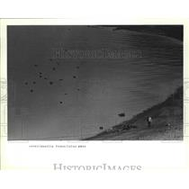 1990 Press Photo Birds Headed Over Possession Sound in Everett as Temps Climb