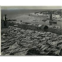 1941 Press Photo Fishermen drying out fish on hillside-Flowers Island in Canada