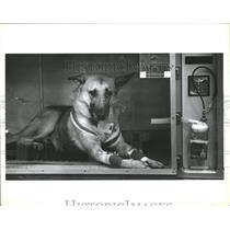 1990 Press Photo Whiskers Dog shot by Gun