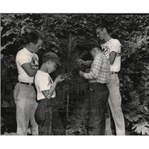 1956 Press Photo Boy Scout Camping Trip Examining Leaves in Nature Study Lesson