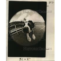 1973 Press Photo New Orleans Saints-Gumbo, mascot of the New Orleans Saints.