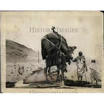 1927 Press Photo Arabian camel taxi in the Saharan deserrt - neo00751