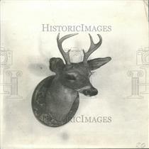 1930 Press Photo Deer Taxidermy
