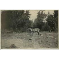 1923 Press Photo Shot at 20-Feet of Rifle - nef39732