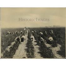 1924 Press Photo Conditions of Japanese in Fertile Sacramento Valley