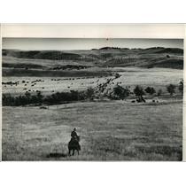 1988 Press Photo Buffalo in Custer State Park in South Dakota - mja60568