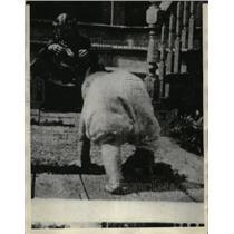 1928 Press Photo Babes Who Walk Like Bears - neo18616