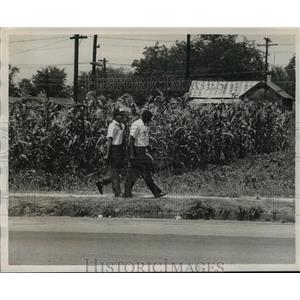 1957 Press Photo Men Walking Past Cornfield, Bessemer, Alabama - abno09972