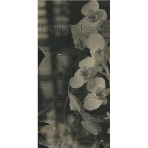 1915 Press Photo Orchid House Philippine Pavilion Rule - RRU71739