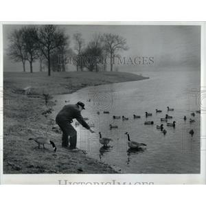 1992 Press Photo Canada Geese Axehead Lake - RRW90573