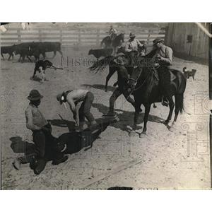 1923 Press Photo Cowboys Pin Down & Brand A Calf