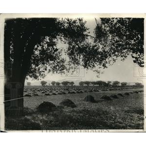 1919 Press Photo Farmers haystacks line his fields in Ohio