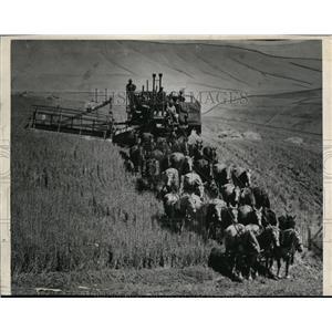 1946 Press Photo Harvest Scene - spa00252