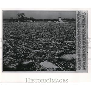 1962 Wire Photo Ice Jam Clogged Kansas River North of Lawrence Broke Off