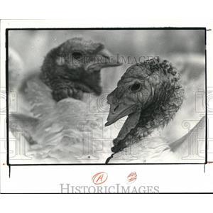 1980 Press Photo The Great Turkey round up portrait - cva77702