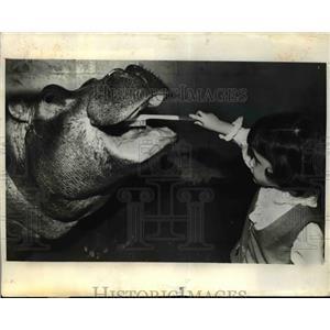 1972 Press Photo Kellu Kronenberg with a hippo at Niabi Xoo in Moline Illinois