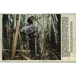 1993 Press Photo Gustovio Luzon strips the lower leaves off maturing cane stalks