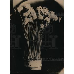 1917 Press Photo Narcissus - nef08986