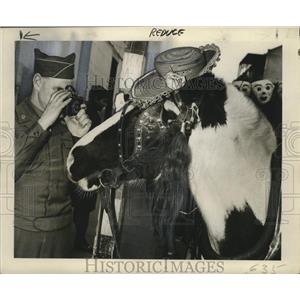 1948 Press Photo Sergeant McLean Takes Photo of Horse, Mardi Gras, New Orleans