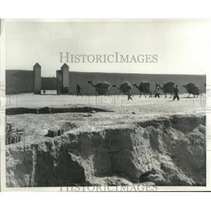 1951 Press Photo Teheran Iran camel caravan carrying loads - mjb98990