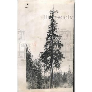 1956 Press Photo Lightning strikes tree - RRW45943
