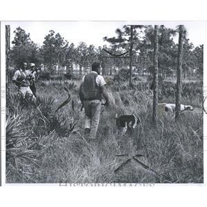 1964 Press Photo Hunting Quail In Florida