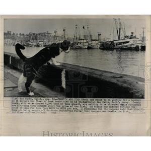 1962 Press Photo San Pedro fleet tuna boats cat fish