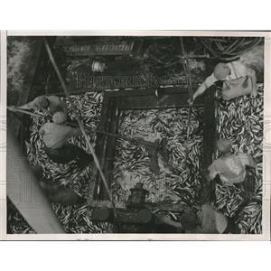 1936 Press Photo Fishermen Unload Fishy Cargo Off The California Coast