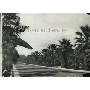1908 Press Photo Chester Place Neighborhood Street Lined Palm Trees, Los Angeles