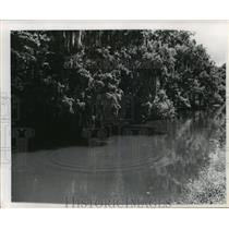 1963 Press Photo Bayou Lafourche - Trees Over Bayou Lafourche, Louisiana